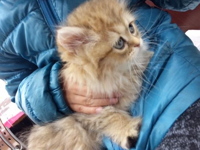 絶対にネコを飼ってやる!!猫嫌いなパパがつけた実は私にも都合のいい条件
