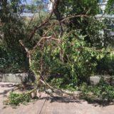 台風への備えに失敗(焦)今までにない台風への恐怖